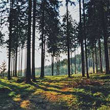 Imagination Land: The Forest: Part 1